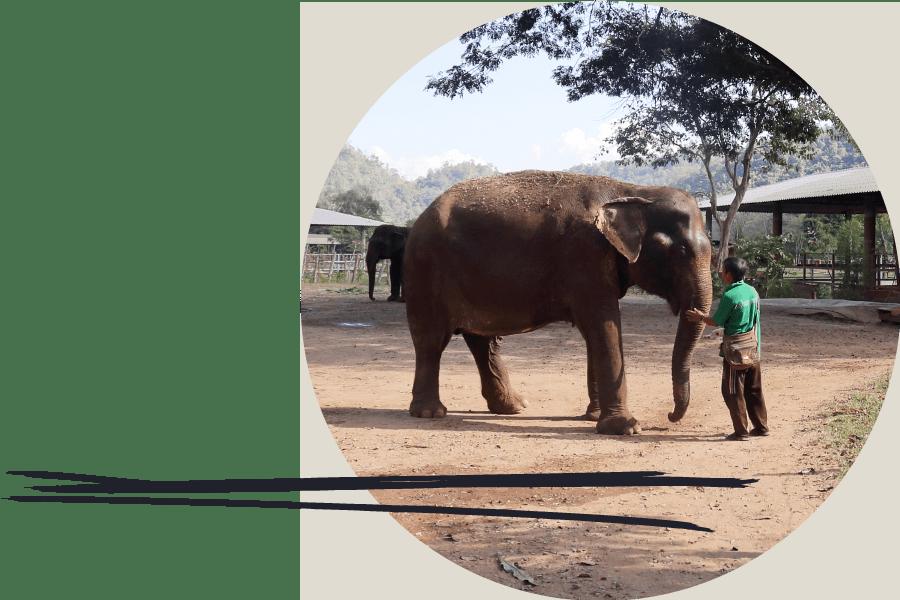 wildlife volunteer petting elephant at an elephant sanctuary