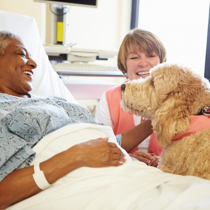 patient in hospital happily petting a therapy dog