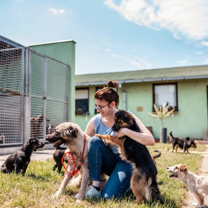 person petting group of dogs at an animal rescue