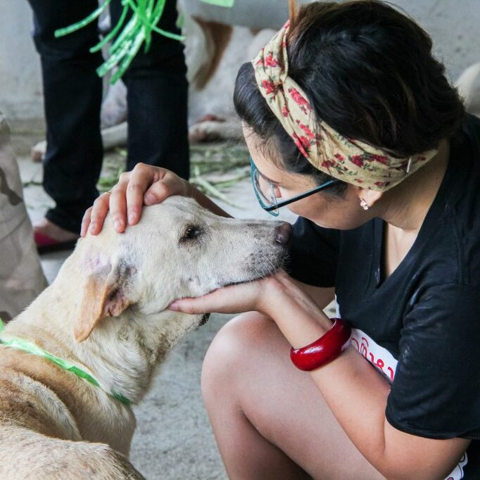 person petting an emaciated rescue dog